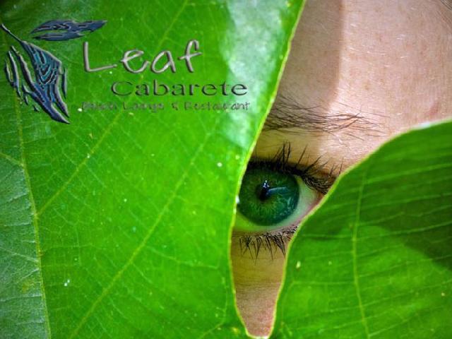 Spring Break Leaf Cabarete - Puerto Plata, Dominican Republic