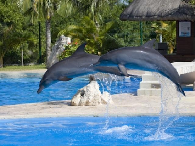 Swim With the Dolphins - Cancun, Mexico