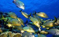 Cancun, Mexico - Jungle Snorkeling Tour